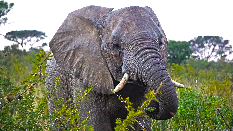 南アフリカのサファリで出会った象