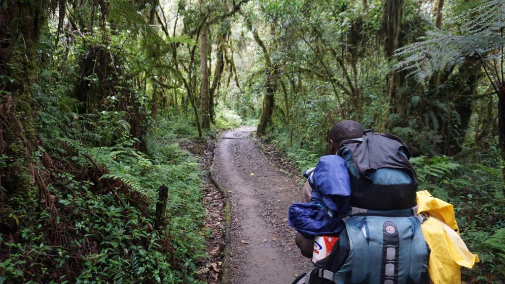 キリマンジャロ登山一日目は林道を歩く