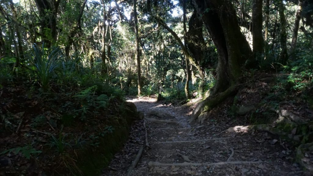キリマンジャロ下山中