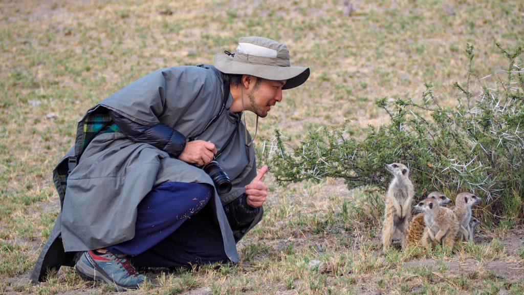 ボツワナの野生のミーアキャットを至近距離で観察
