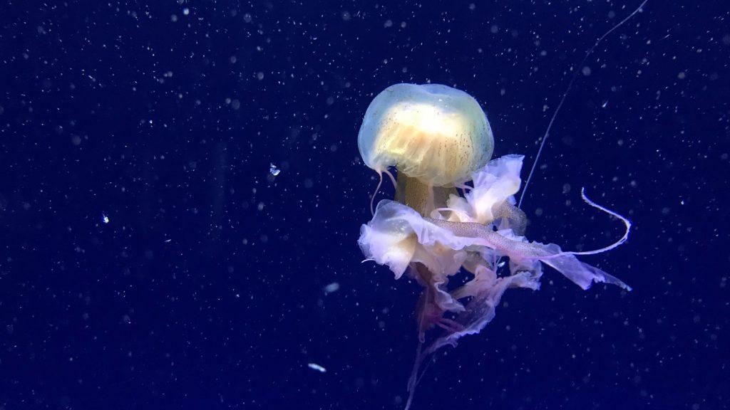 海洋学カリキュラムの追加