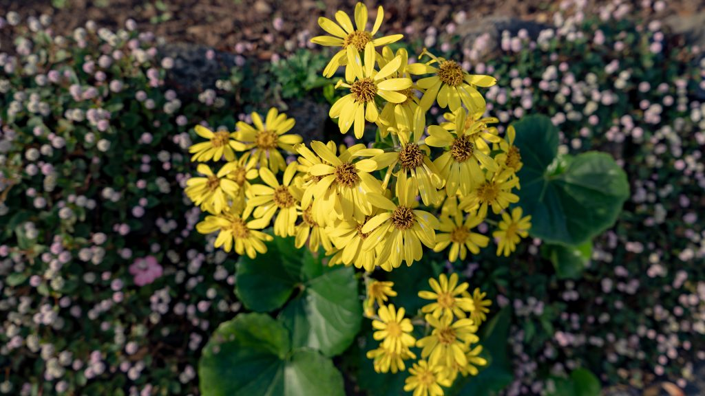寝姿山の順路で見つけた黄色い花