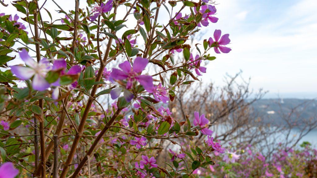 寝姿山の順路で見つけた紫色の花