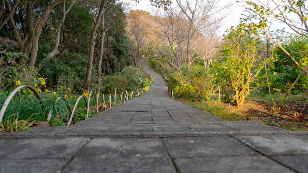 寝姿山の順路を歩く