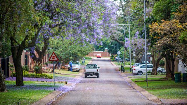 【2018】南アフリカ・プレトリアのジャカランダ並木の写真・画像