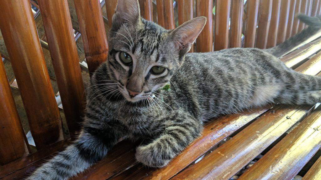 セブ留学TARGETの校舎で飼われている猫