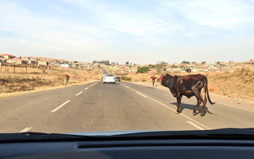 南アフリカの道路では動物が飛び出してくる