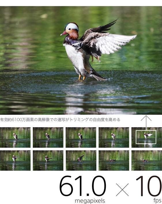 有効約6100万画素の高解像で、AF/AE追随。最高約10コマ/秒の高速連写